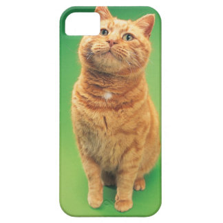 Ginger cat sitting, looking upwards iPhone 5 covers