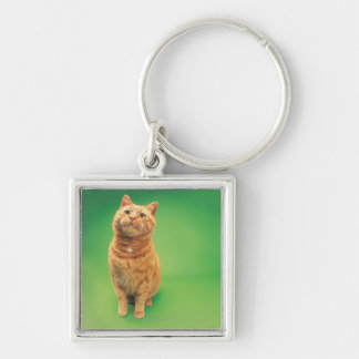 Ginger cat sitting, looking upwards Silver-Colored square key ring
