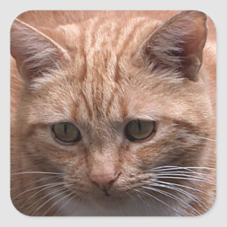 Ginger Cat Square Sticker