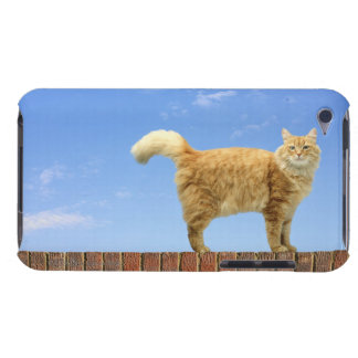 Ginger Cat Standing on Brick Wall iPod Touch Case-Mate Case