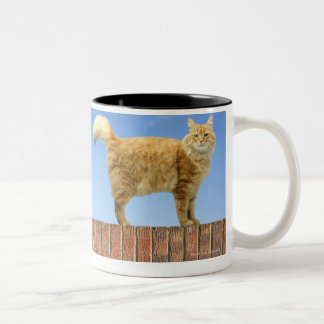 Ginger Cat Standing on Brick Wall Two-Tone Coffee Mug