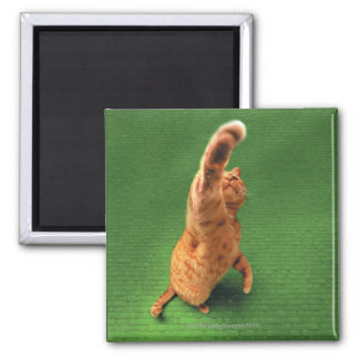 Ginger cat stretching out paw square magnet