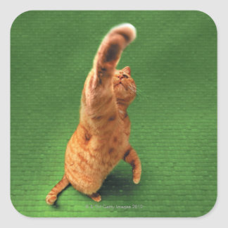 Ginger cat stretching out paw square sticker