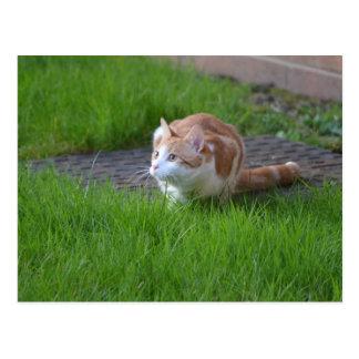 Ginger Cat Watching Postcard