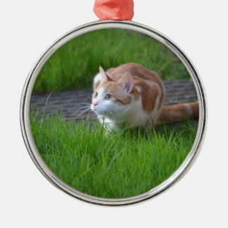 Ginger Cat Watching Silver-Colored Round Decoration