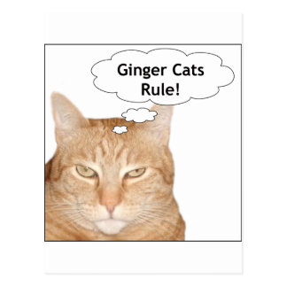 Ginger Cats Rule! Postcard