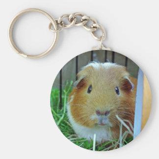 ginger guinea pig basic round button key ring