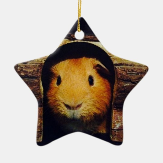 Ginger Guinea Pig Gifts Christmas Ornament
