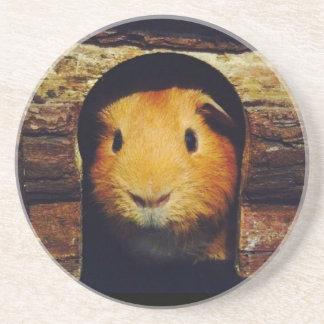 Ginger Guinea Pig Gifts Coaster