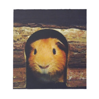 Ginger Guinea Pig Gifts Notepad