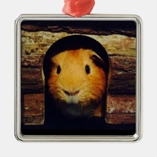 Ginger Guinea Pig Gifts Silver-Colored Square Decoration