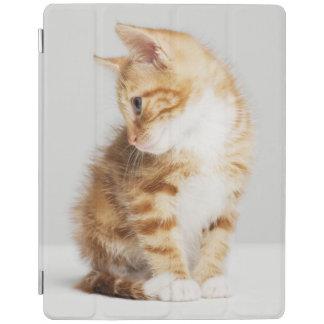 Ginger Kitten iPad Cover