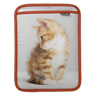 Ginger Kitten iPad Sleeve