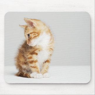 Ginger Kitten Mouse Pad