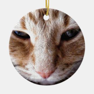 Ginger Kitten Round Ceramic Decoration