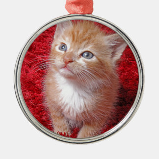 Ginger Kitten Silver-Colored Round Decoration