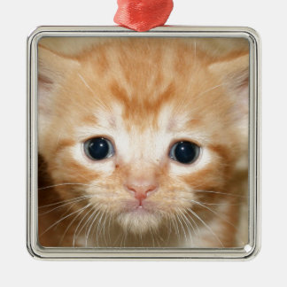 Ginger kitten Silver-Colored square decoration