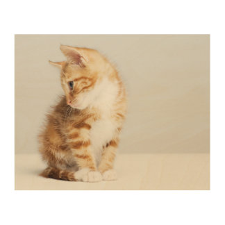 Ginger Kitten Wood Print