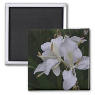 Ginger Lily-0105 Refrigerator Magnets