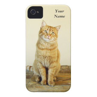 Ginger Tabby Cat iPhone 4 Barely Case