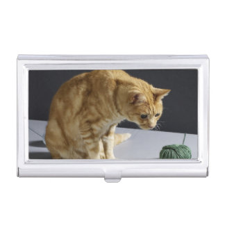 Ginger tabby cat sitting on table business card holder