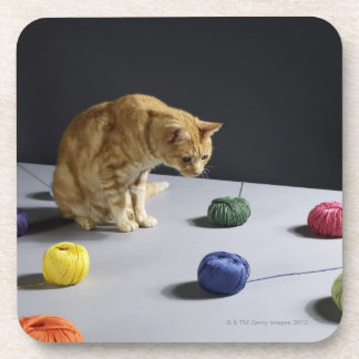Ginger tabby cat sitting on table coaster