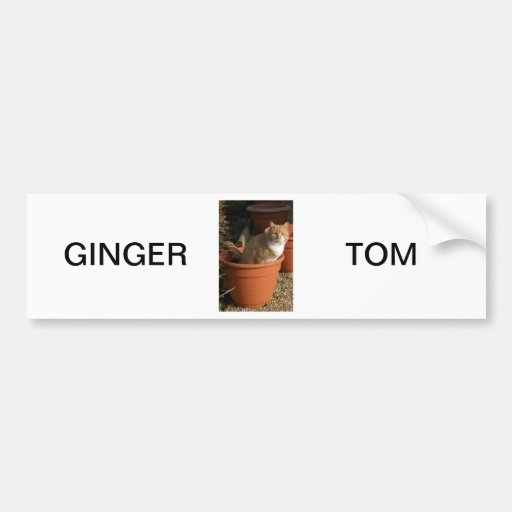 Ginger Tom Cat Bumper Sticker