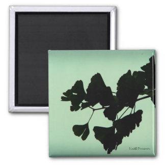 Gingko - backlit against the sky square magnet