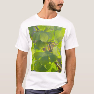 Gingko leaves in autumn sun 002 T-Shirt