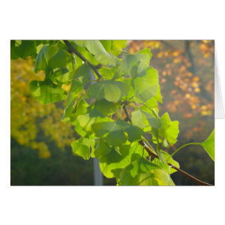 Gingko leaves in autumn sun card