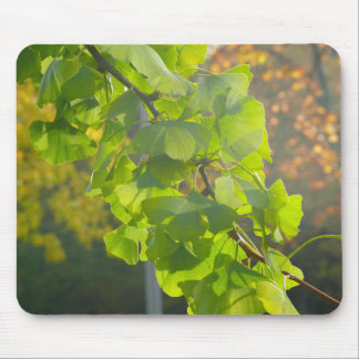 Gingko leaves in autumn sun mouse pad