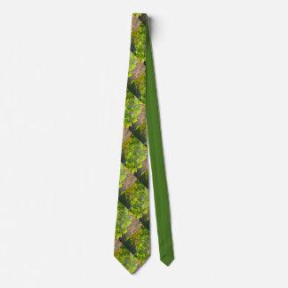 Gingko leaves in autumn sun tie