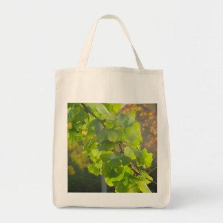 Gingko of leaves in autumn sun