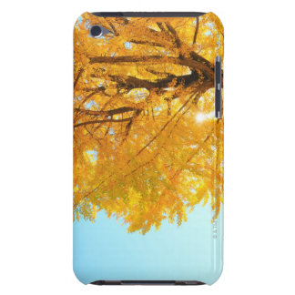 Gingko Tree, Nagano Prefecture, Japan Barely There iPod Covers