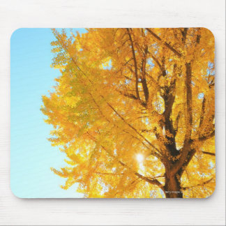 Gingko Tree, Nagano Prefecture, Japan Mouse Mat