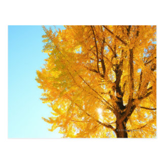 Gingko Tree, Nagano Prefecture, Japan Postcard
