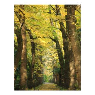 Ginkgo Biloba trees 21.5 Cm X 28 Cm Flyer