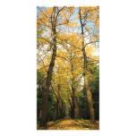 Ginkgo biloba trees personalised photo card