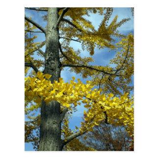Ginkgo in fall postcard