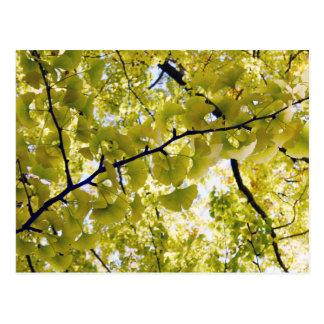 Ginkgo Leaves: Japan Postcard