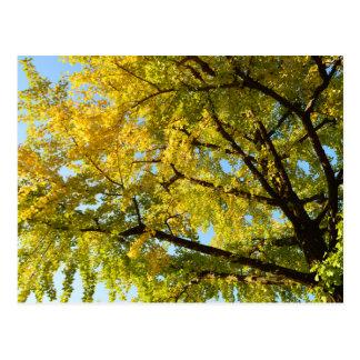 Ginkgo Tree: Japan Postcard
