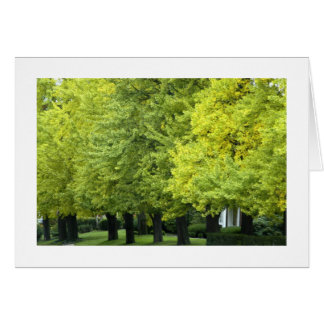 Ginkgo Trees On Highland Ave, Pittsburgh PA Card