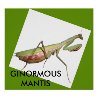 GINORMOUS MANTIS POSTERS