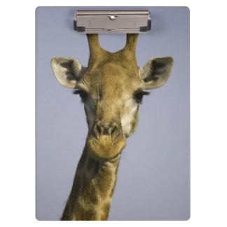 Giraffa Camelopardalis Clipboard