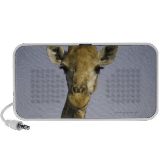 (giraffa camelopardalis), looking at camera, in mp3 speakers