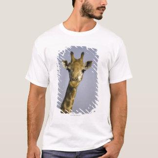 (giraffa camelopardalis), looking at camera, in T-Shirt