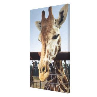 Giraffe 4 stretched canvas print
