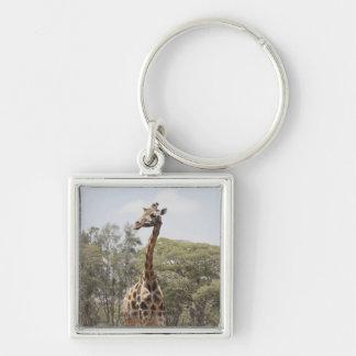 Giraffe 5 Silver-Colored square key ring