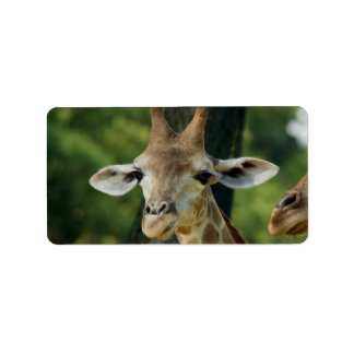 Giraffe Address Label