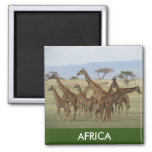giraffe africa square magnet